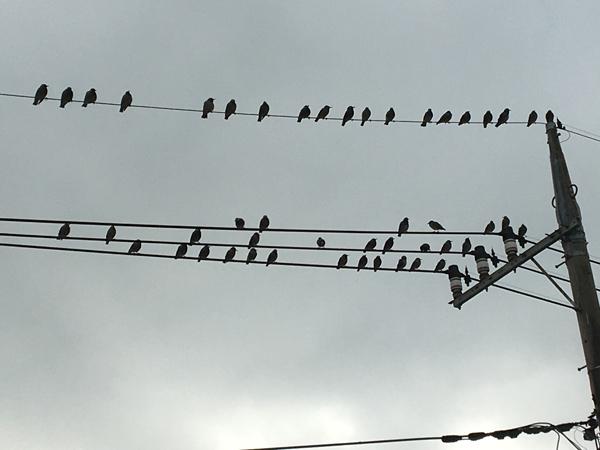 10 鳥 のコピー
