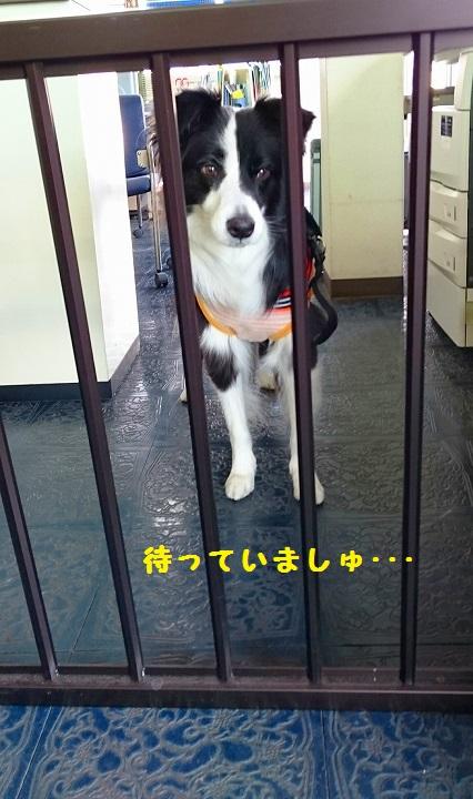 s-_20151225_191041.jpg
