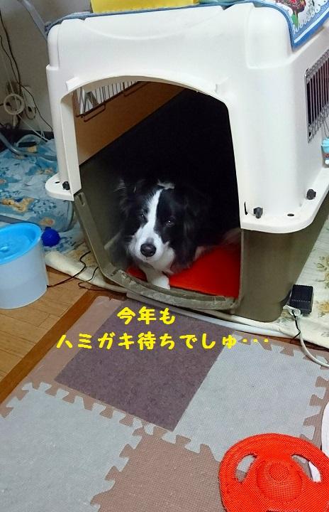 s-_20160101_182556.jpg