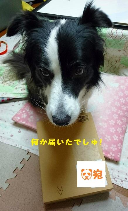 s-_20160122_191725.jpg