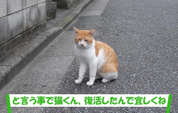 「と言う事で猫くん、復活したんで宜しくね」