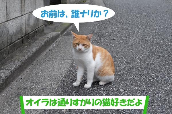 お前は、誰ナリか? 「オイラは通りすがりの猫好きだよ」