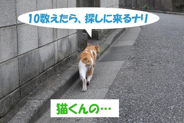 10数えたら、探しに来るナリ 「猫くんの…」<br />