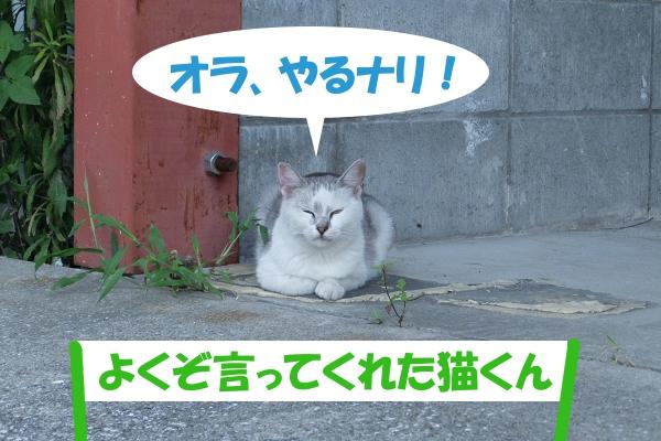 オラ、やるナリ! 「よくぞ言ってくれた猫くん」