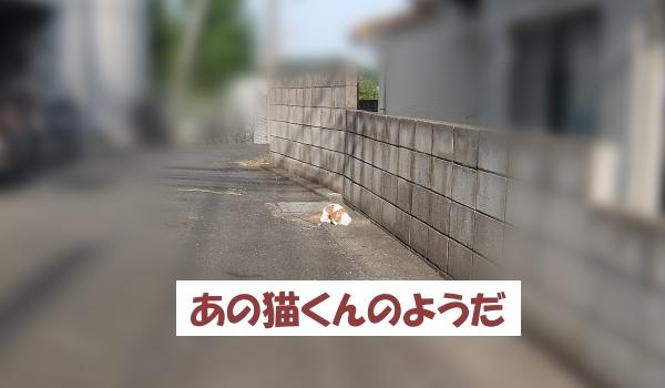 あの猫くんのようだ