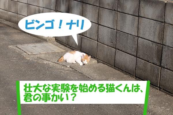 ビンゴ!ナリ 「壮大な実験を始める猫くんは、君の事かい?」