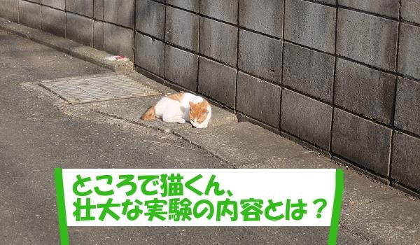 「ところで猫くん、壮大な実験の内容とは?」