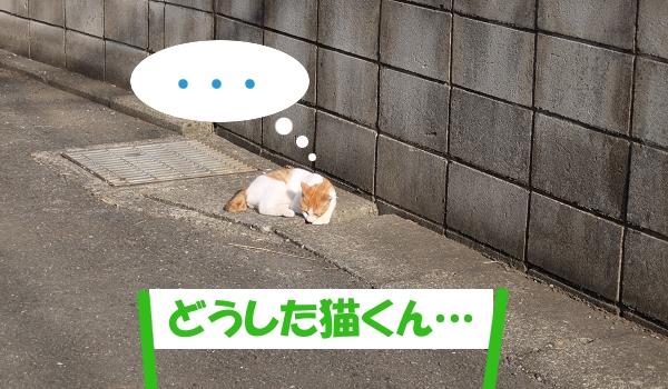 ... 「どうした猫くん」