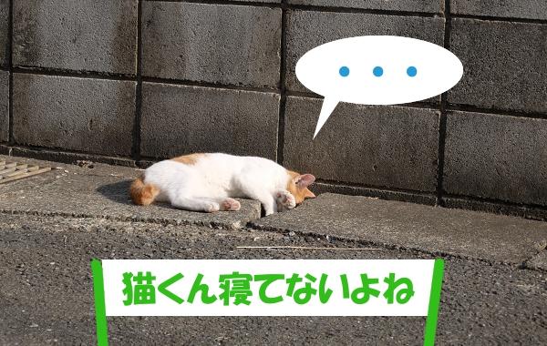 ・・・ 「猫くん寝てないよね」