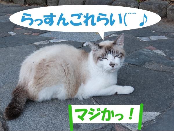 らっすんごれらい(^^♪ 「マジかっ!」