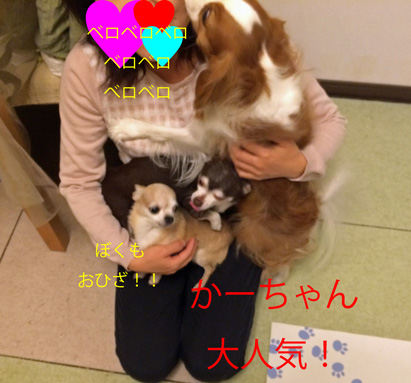 20151213-12.jpg