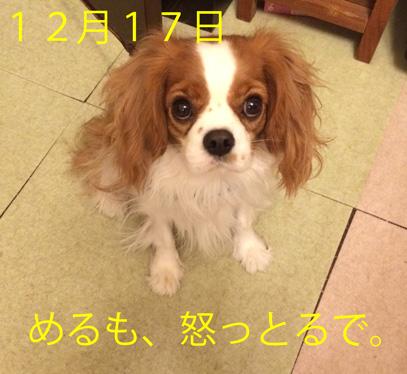 20151230 (22)