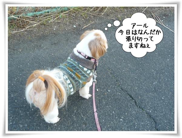 P1130149_1.jpg