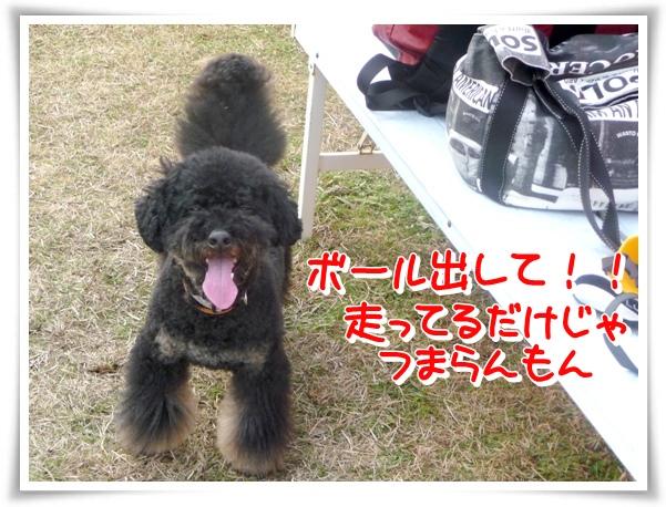P1130279_1.jpg