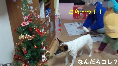 20151125クリスマスツリー②