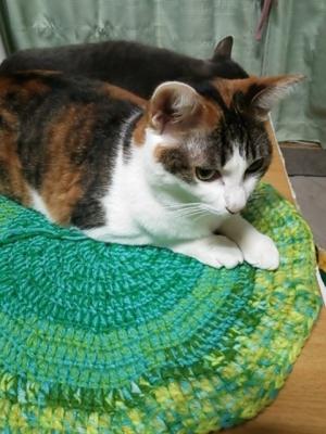 猫用ベッド かぎ針編み アクリル毛糸