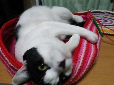 アクリル毛糸 猫用ベッド