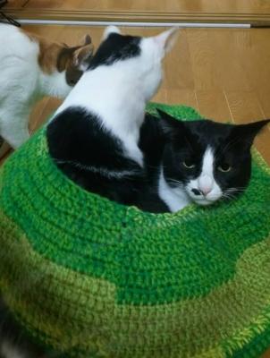 猫用ベッド アクリル毛糸 使用例