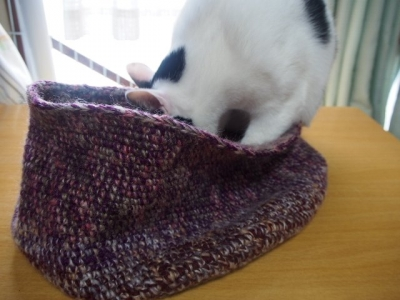 猫用ベッドで遊ぶアトム