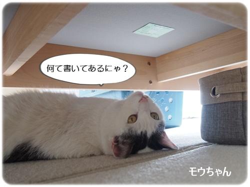 モウちゃん