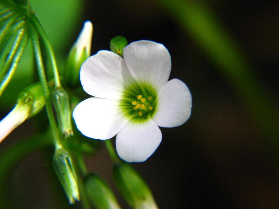 20-small-flowers20151230.jpg
