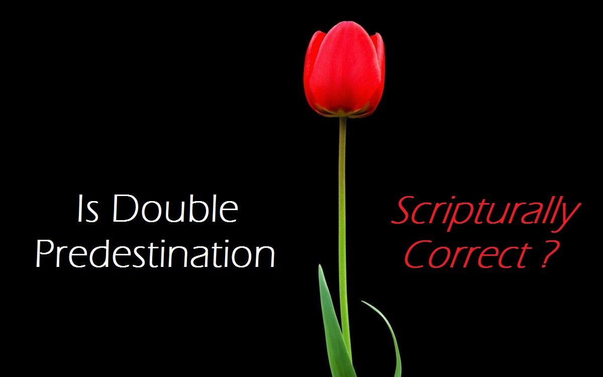 tulip1120151228.jpg