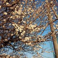 16-01-28-15-49-16-079_photo.jpg