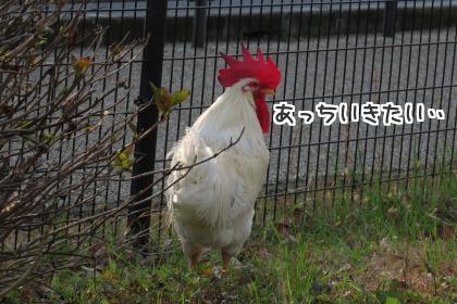 二太2016/01/01-2