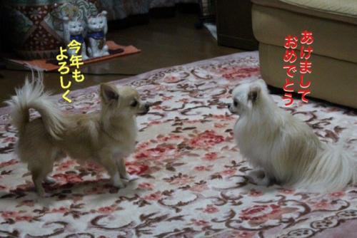 16-0102-3.jpg