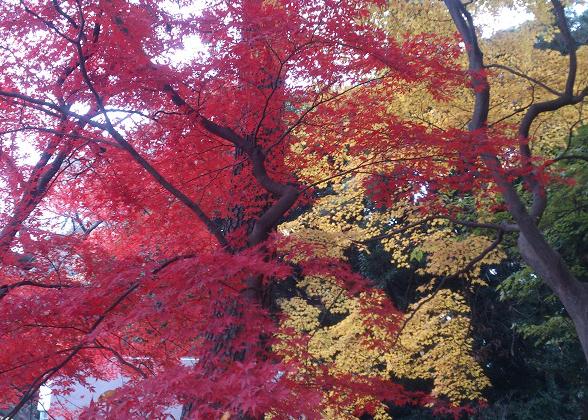 黄色と赤の紅葉