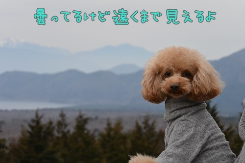 RDSC_0815_Y.jpg