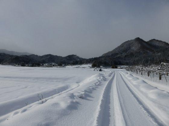 雪原が広がる須川平