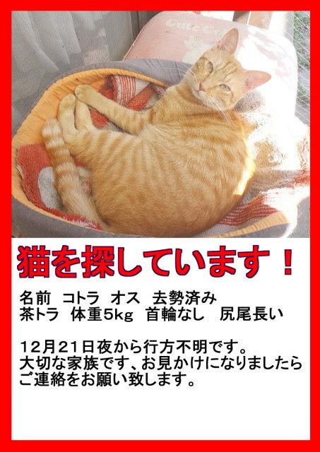 猫ポスター3