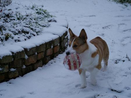 160120雪景色 (7)