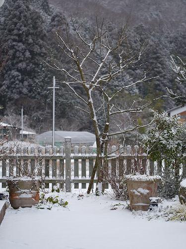 160120雪景色 (9)