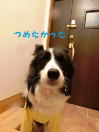 CIMG8956.jpg