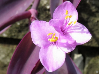 紫御殿 (2)