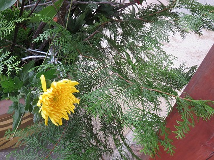 菊と檜の葉
