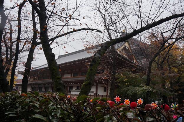 増上寺の裏側