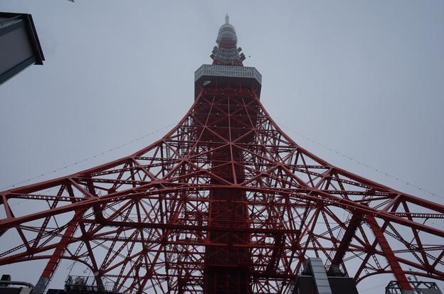真下から見る東京タワー