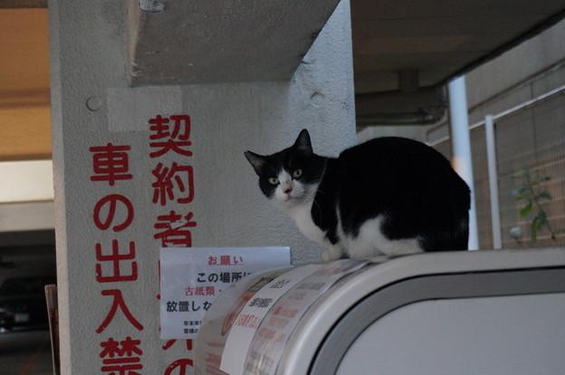 出張先で出逢うカワイコちゃん(=^・・^=)
