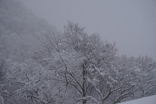 雪景色は時に美しい