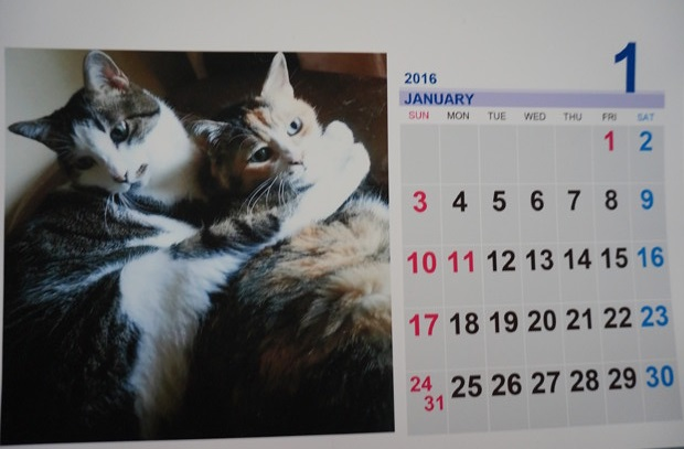 2016.1の大吉桜カレンダーその1