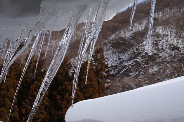 氷柱の群集