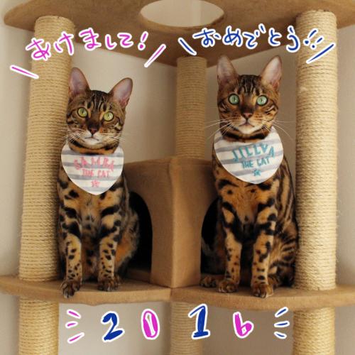 20160102_01.jpg