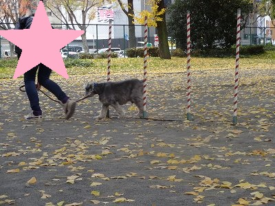 s-レッスン12月2週 (9)