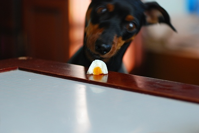 s-マクロでゆで卵 (6)