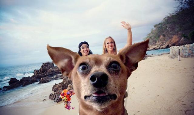 lesbian-beach-photobomb-dog.jpg