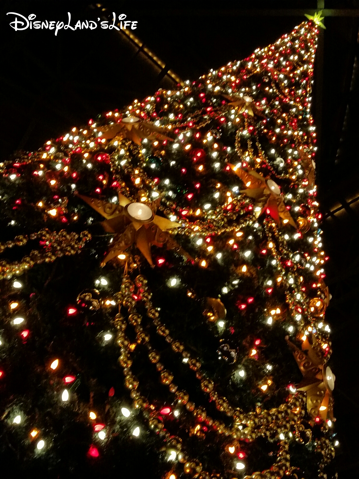 Christmas2015_038.jpg