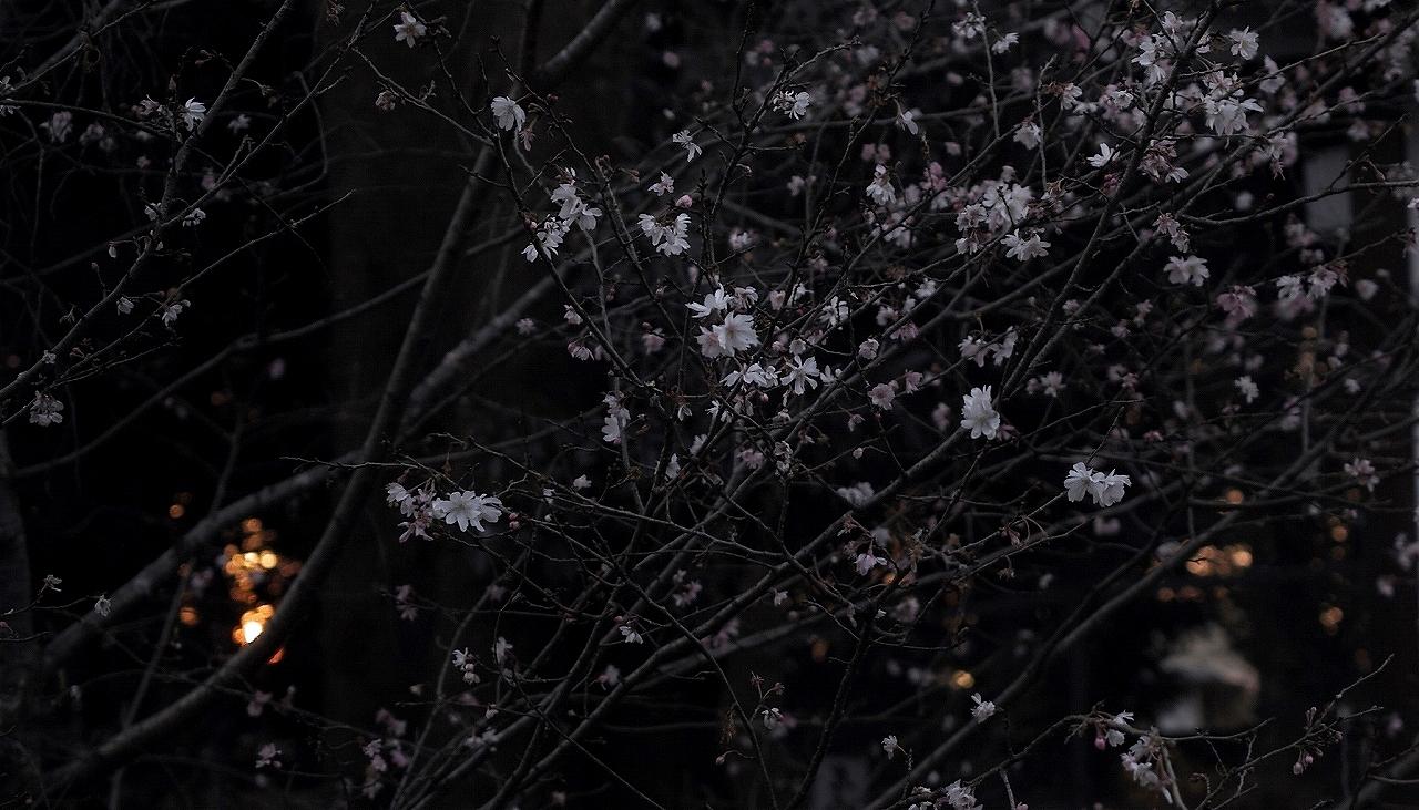 XX014平野神社